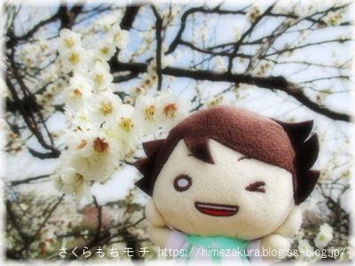 11oikawa_top.jpg