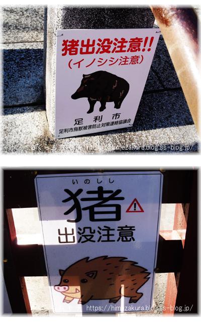 15inoshishi.jpg